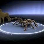 Hund vs. Spinne