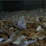 2 Tonnen Brot