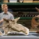 DInosaurier, die geheime entdeckung