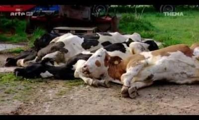 Tote Tiere, Kranke Menschen: Werden wir von Monsanto mit Glyphosat vergiftet?